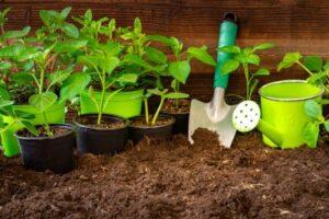 plotting soil