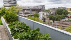 terrace-gardening